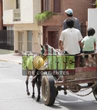 Mapac denuncia que se multiplican los casos de maltrato hacia los caballos