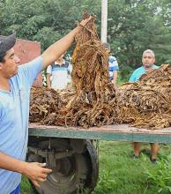 Esperan el envío de $35 millones para la compra de insumos tabacaleros