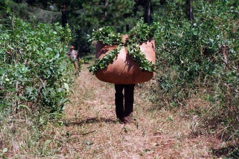 Limitan la siembra de yerba, Corrientes iría a la Justicia