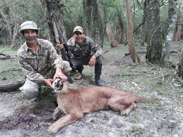 f172de28c7ed4 Exigen control por aumento de la caza furtiva de pumas | Norte ...