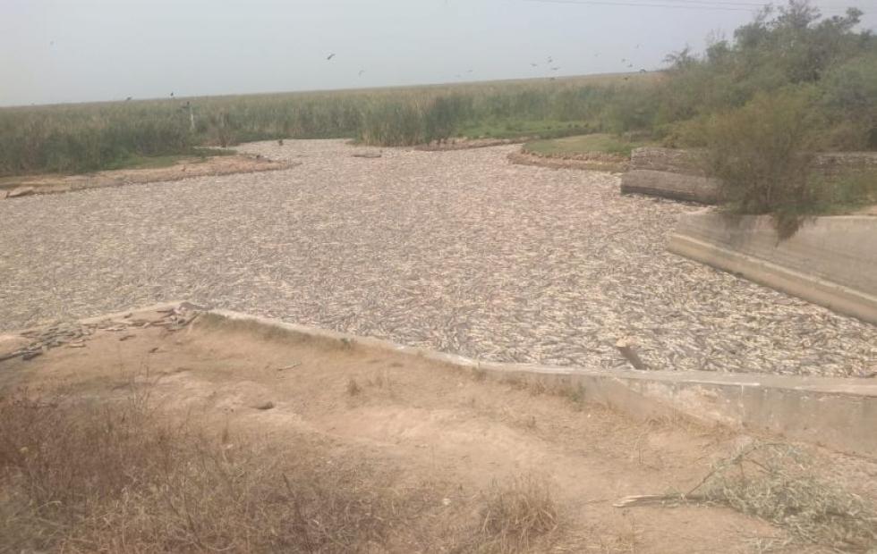 Formosa: Millones de peces muertos en el Bañado la Estrella