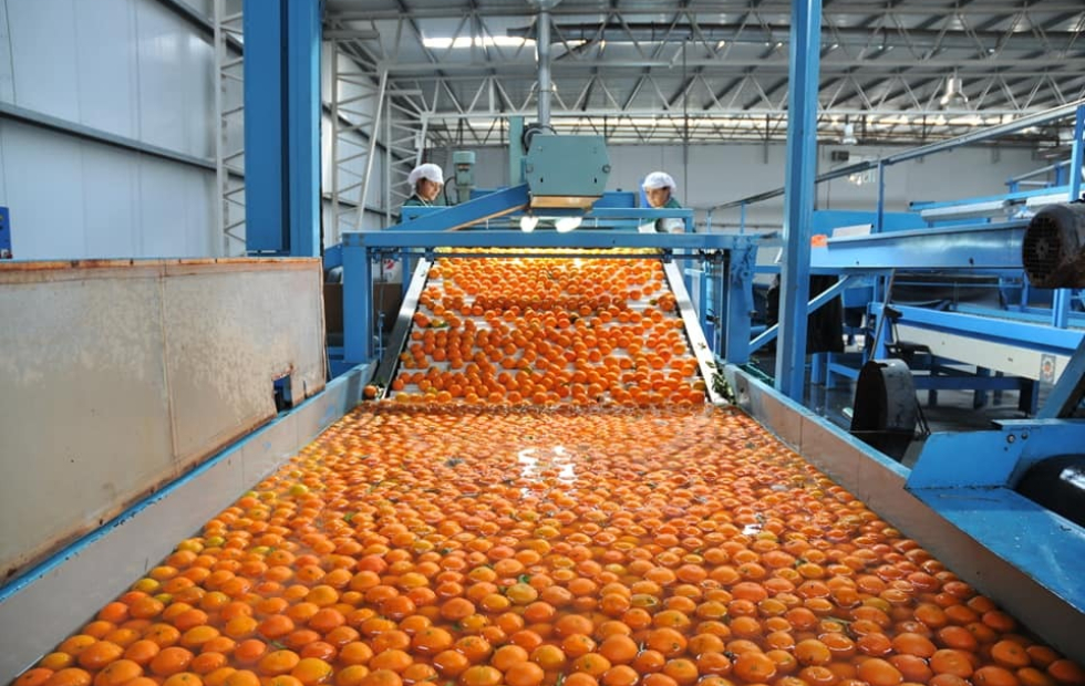 Destraban restricciones y productores de Corrientes podrán volver a exportar cítricos a Europa