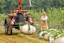 Producción local de yerba mate