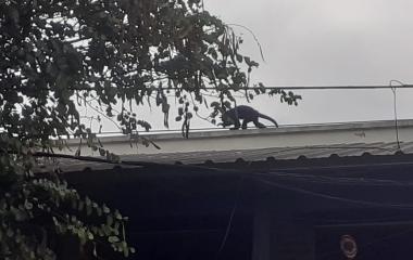 Un escurridizo mono pone en alerta a vecinos del barrio La  Rozada